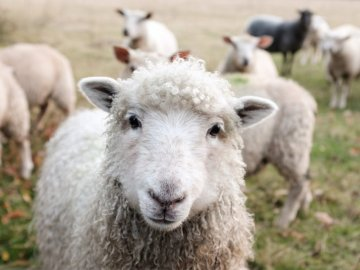 How to clean and maintain merino wool clothing